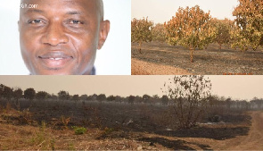 Fire destroys 200 acres of Mango Plantation belonging to NPP MP over citing of Regional capital